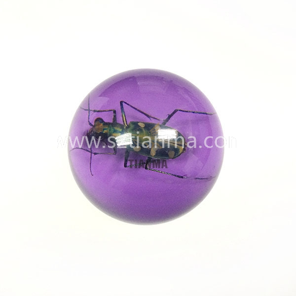 Color acrylic ball display ball wth insect inside