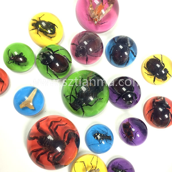 Colorful Unique REAL acrylic insect for souvenir