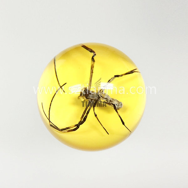 Real acrylic insect blocks _ insects in resin
