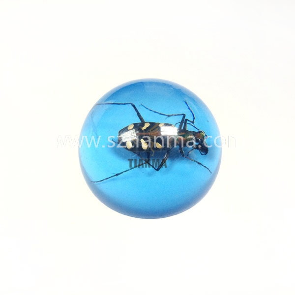 Resin Skull Insect Embedment Skull Block for Teach