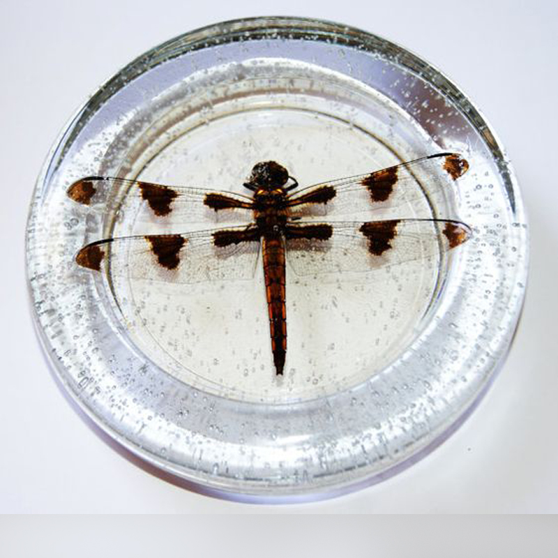 Lucite Paperweight Customized Dragonfly
