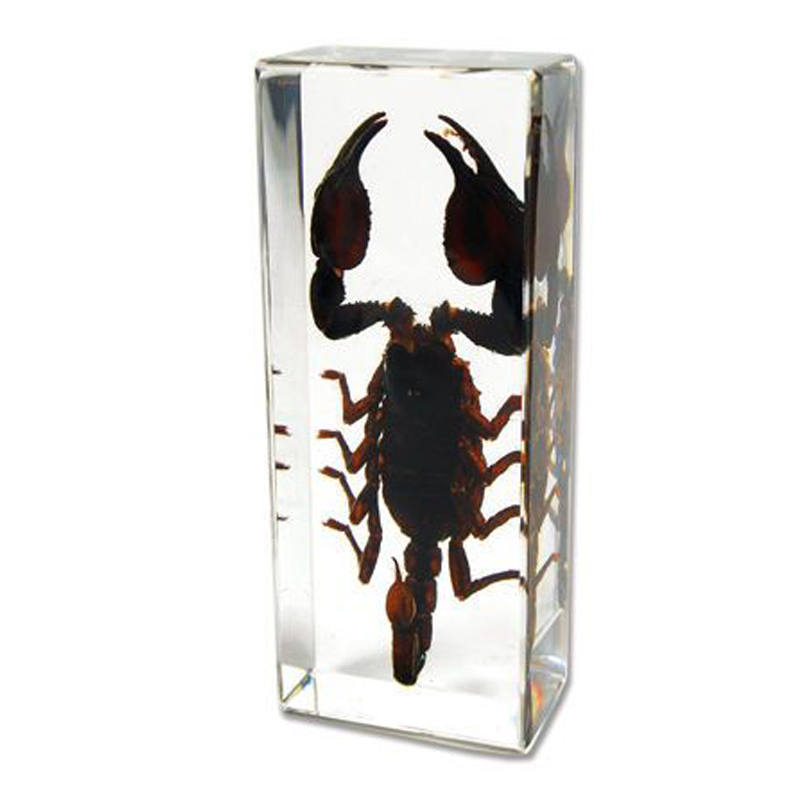 Custom Lucite Scorpion Paperweight Resin