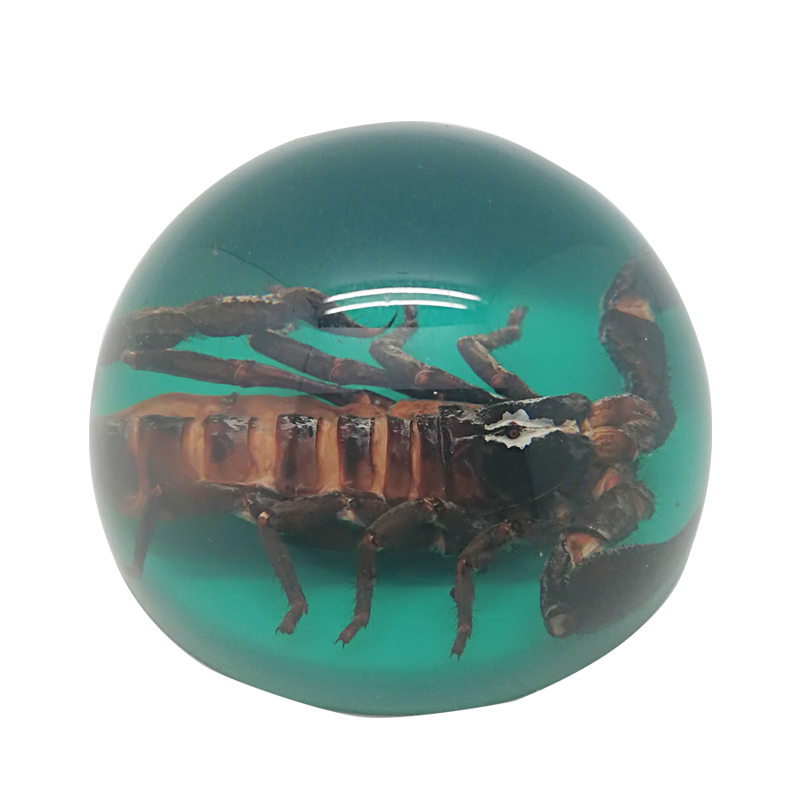 Wholesale Customized Light Green Real Insect Half of Ball Resin