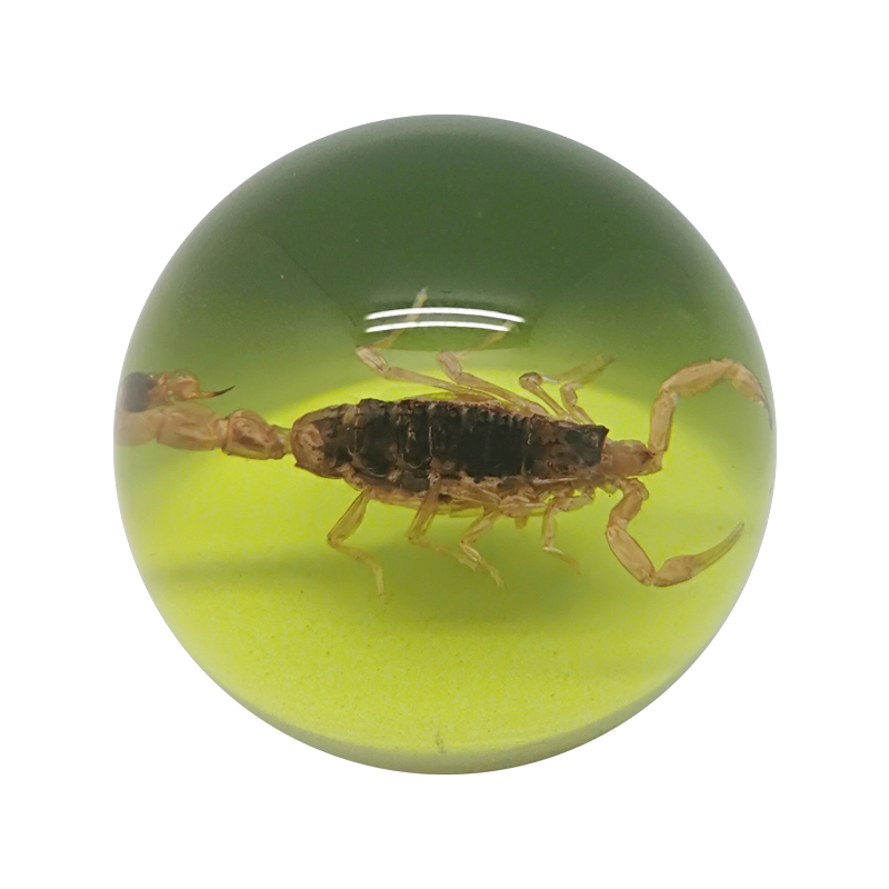 Real Insect Amber Acrylic Resin Paper Weights