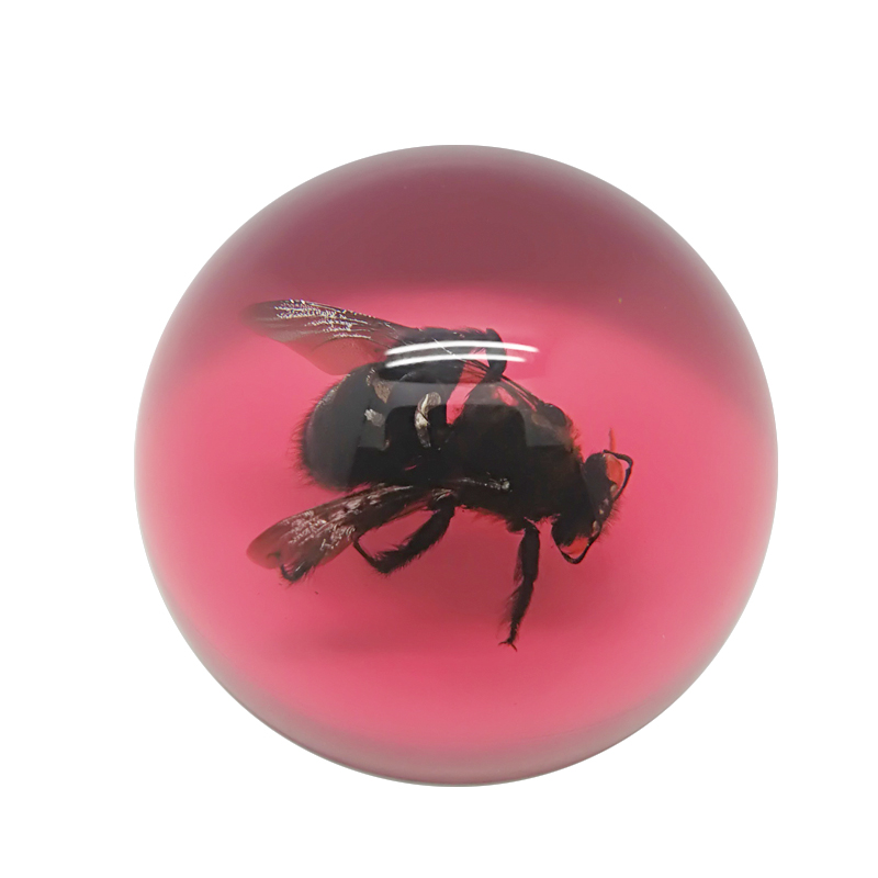 Acrylic Resin Amber Real Insect Balls Paperweight