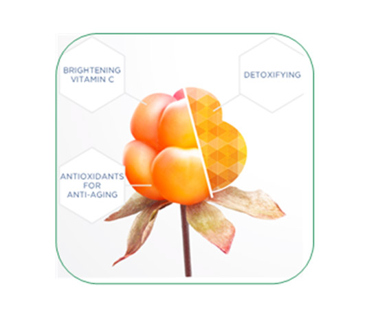 北极芸莓籽提取物ARCTIC SUN Cloudberry Seed Extract