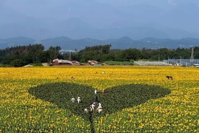 日本这十个最受欢迎的风景地,这辈子一定要去一次!