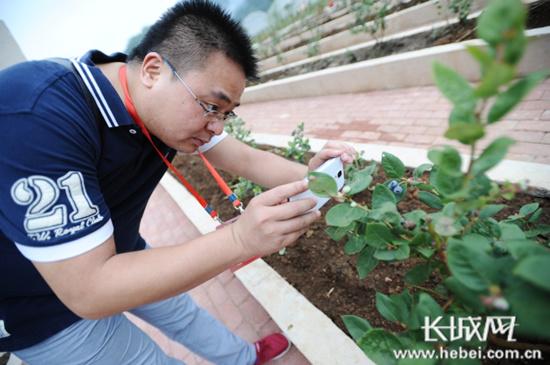 贵州百灵中药材基地:用科技种植带动农业产业发展