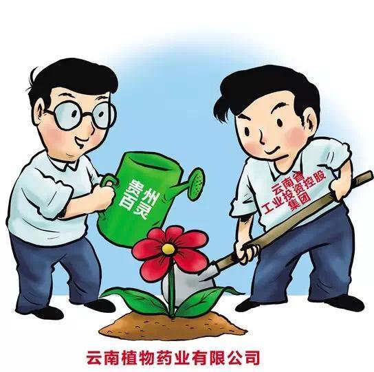 云南日报丨贵州百灵牵手云植药业 跨省混改正落地开花
