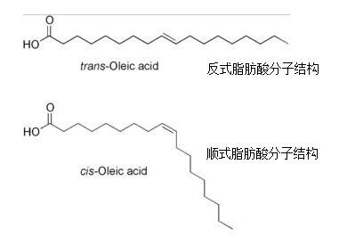 油脂及脂肪酸对人体的生理功能和作用