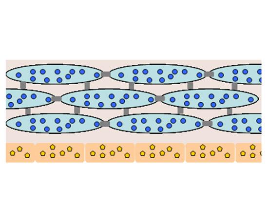 海洋即时、长效水活因子-Pheohydrane