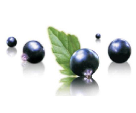 北极黑加仑籽油EFADUO Blackcurrant Seed Oil