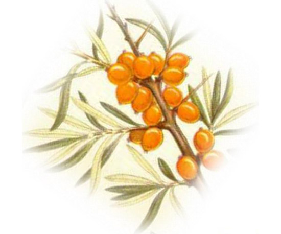 北极沙棘果油SHAJIO Sea Buckthorn Berry Oil