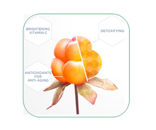 北极芸莓籽提取物ARCTIC SUN Cloudberry Seed Extract