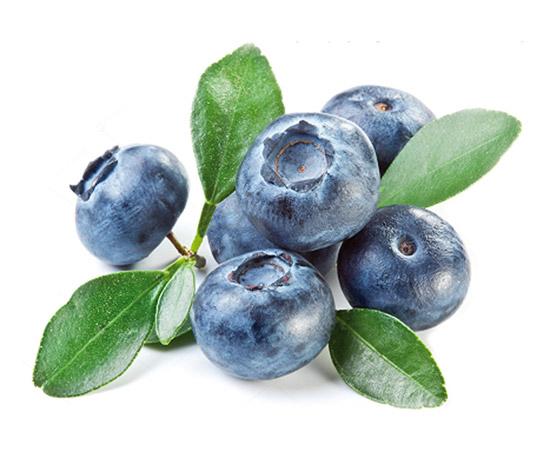 超弹性欧洲越桔提取物-NioSkin™-Bilberry