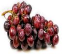 葡萄多酚高效抗氧化因子 UVIOX