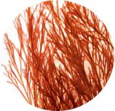 眼袋消消藻 B-SHAPE