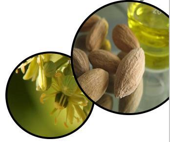 罗氏槲果籽油 Organic desert date oil