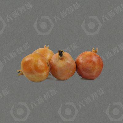 酸甜石榴模型(六新复制品)