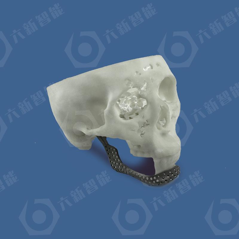 下颚骨模型