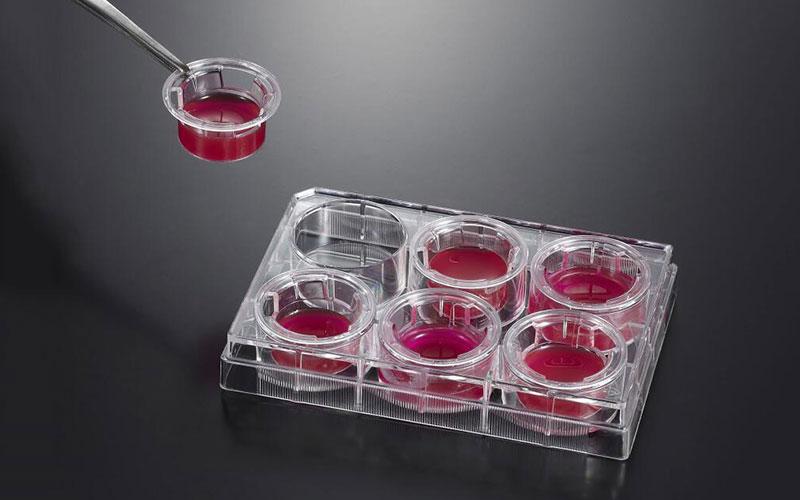 细胞嵌入皿