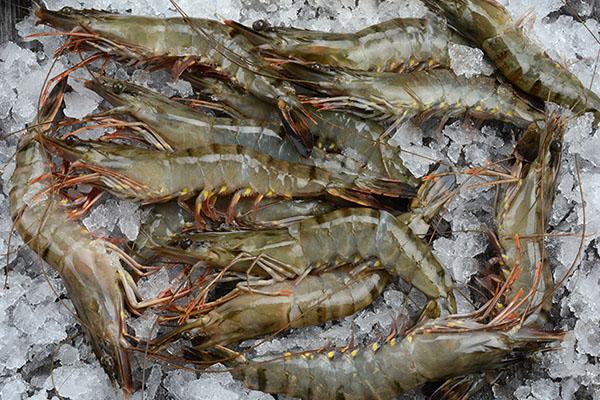 斑节虾(实时批发价格咨询客服13163761175)