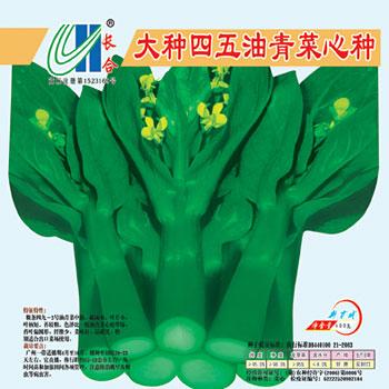大種四五油青菜心種