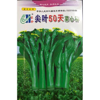 尖叶50天菜心种