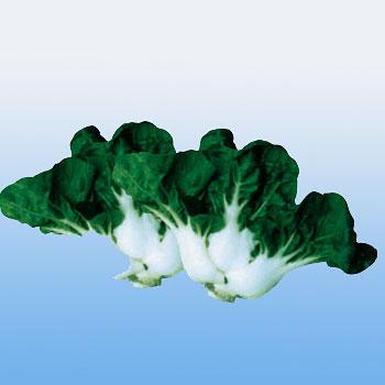 鹤斗小奶白菜种