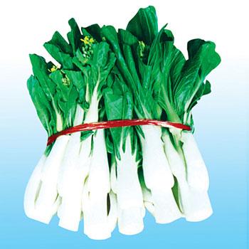 交配白菜苔种