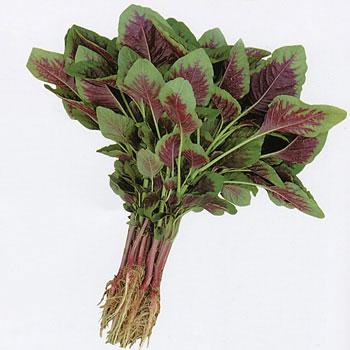 1号花红苋菜种