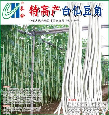 特高产白仙豆角种