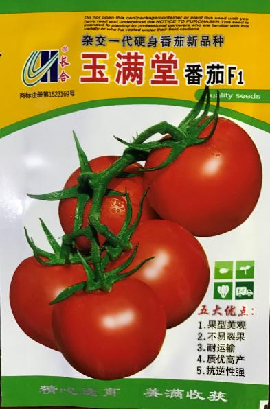 玉满堂番茄F1(大果型硬身番茄)