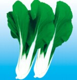 黄叶白菜种