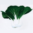 葵扇矮脚黑叶白菜种