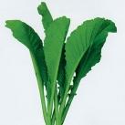 四季春菜种