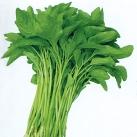 尖叶苋菜种