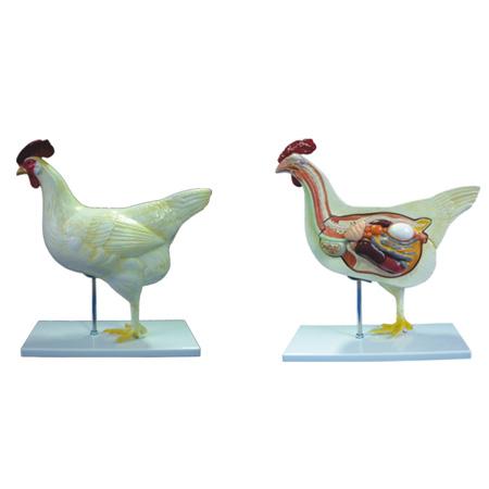 EP-1343 Chicken Model(5 parts)