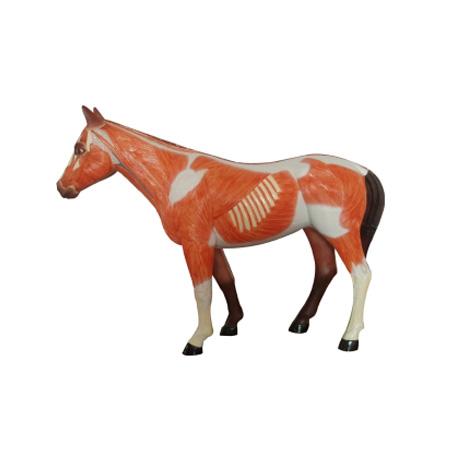 EP-1345 Horse Model