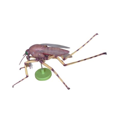 EP-1351 Mosquito Model (8 parts)