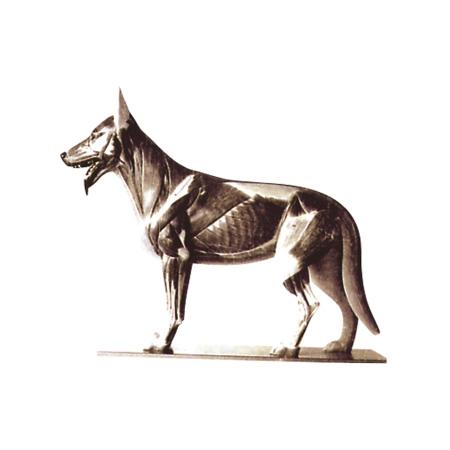 EP-1349 Dog Model