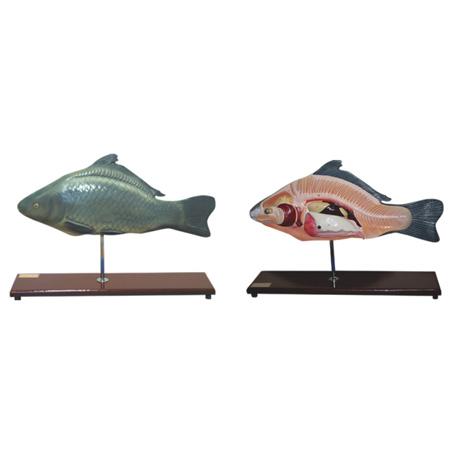 EP-1354 Fish Model