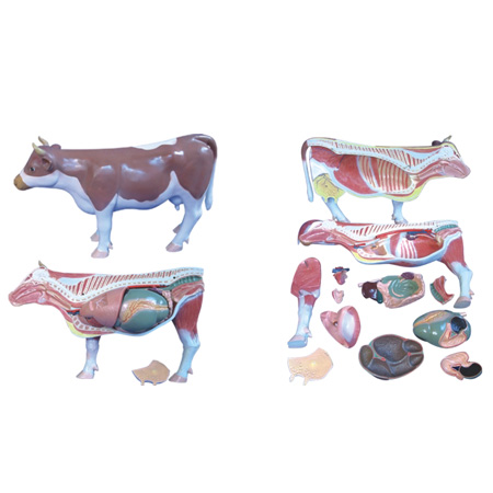 EP-1356 Cattle Model (18 parts)