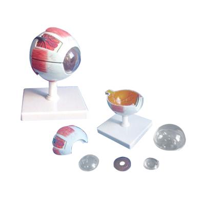 EP-663 Eyeball Model