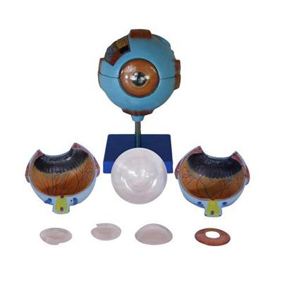 EP-658 Eyeball Model