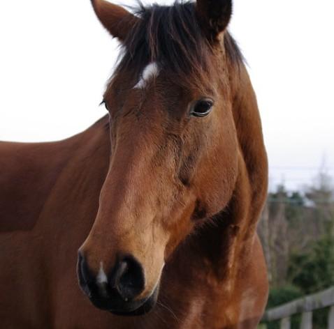 African Horse Sickness Antibody ELISA