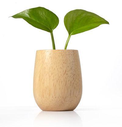橡胶木整木量米杯(容量约120g)