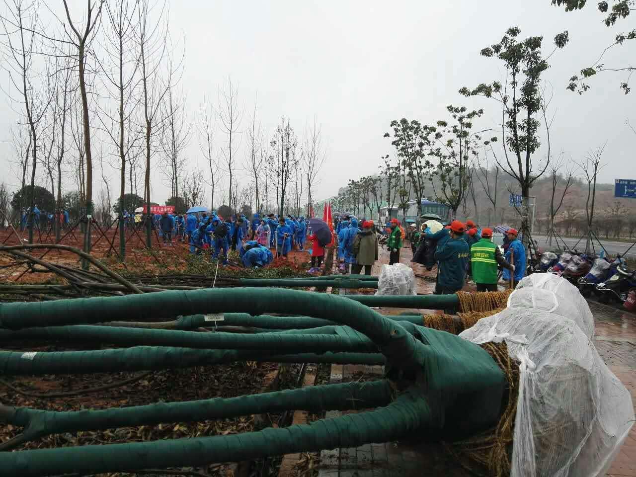 2017.3.12 湘潭市在我工地上的植树活动.jpg
